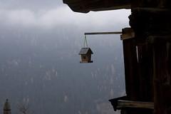Bird Watch (raumoberbayern) Tags: wood mountains alps grass topv111 clouds austria tirol österreich topv555 topv333 heaven farm topv999 topv444 meadow topv222 topv777 gras alpen larch wald topv666 bauernhof birke topv888 robbbilder vogelhäuschen
