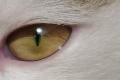 Dora's eye