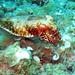 christoph creutzburg - gemeiner tintenfisch