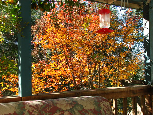 November 2008 autumn glow