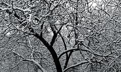 bir k manzaras....a winter scenery (*Sem*) Tags: winter snow fun fourseasons kar naturesfinest addictedtoflickr kartpostal freephotos enstantane flickrestrellas flickrlovers grouptripod