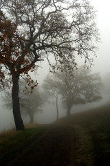 Ghost Trees (John-Morgan) Tags: california nature leaves silhouette fog landscape ghost openspace walnutcreek graphical shellridge johnmorgan platinumphoto atmospheretree