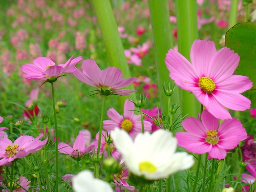 I love flower so much...