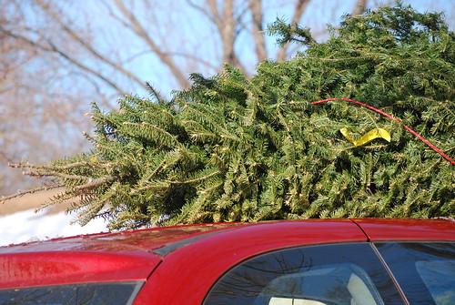 Put the lights on the tree...