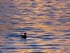 ... un mare di platino (FranK.Dip) Tags: desktop sunset wallpaper tramonto mare porto gabbiano brindisi sfondo sfondi platino flickrlovers frankdip