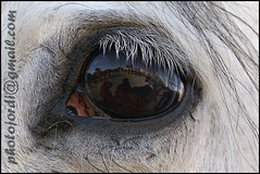 Horse's eye !! (Photojordi) Tags: horse eye saint caballo cheval ojo san calafell el anthony carro tres antonio cavalo pferd auge dier occhio tombs hest equus oog paard cavall abad auga ull oko hst ga  ko begi  je zaldi ollo trestom
