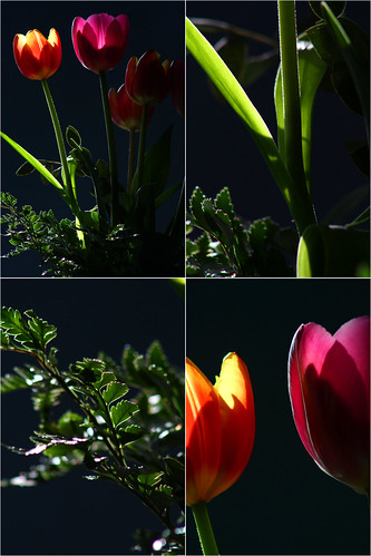 Szülinapi virágom Try-től :)