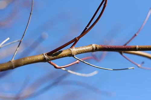 branch 001