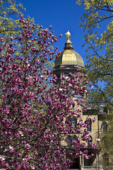 Notre Dame, Spring (riggsy23) Tags: flowers trees building architecture canon golden spring purple dome notre dame administration