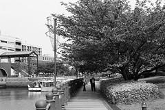 FM2_Planar_Yokohama_20110509_19 (Jun Takeuchi) Tags: bw slr film monochrome japan zeiss blackwhite nikon kodak iso400 streetphotography 日本 yokohama filmcamera kodakbw400cn kanagawa 横浜 fm2 singlelensreflex planar 神奈川 carlzeiss 神奈川県 bw400cn c41 filmphotography zf fm2n nikonnewfm2 横浜市 planart1450 planar1450 一眼レフ planart50mmf14zf planart1450zf