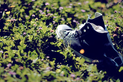 Shoes (ilPaguro) Tags: grass nikon converse nikkor 50 prato afs scarpe d3000