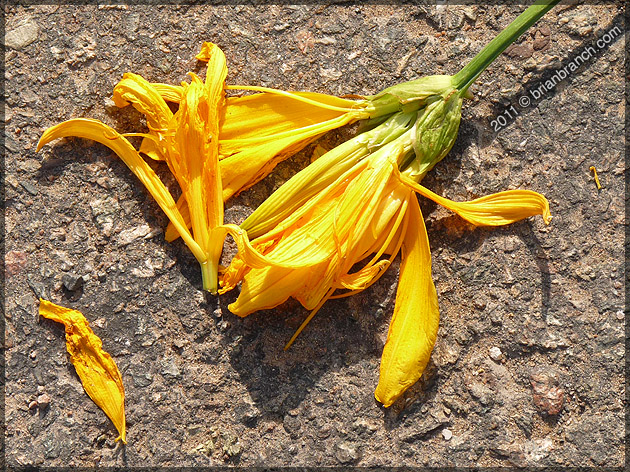 P1150726_flower_and_road