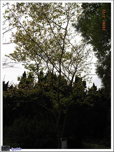 陽明山花季 018