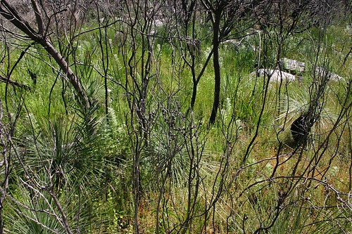 Coastal heath. From the beautiful Manly to The Spit Walk.