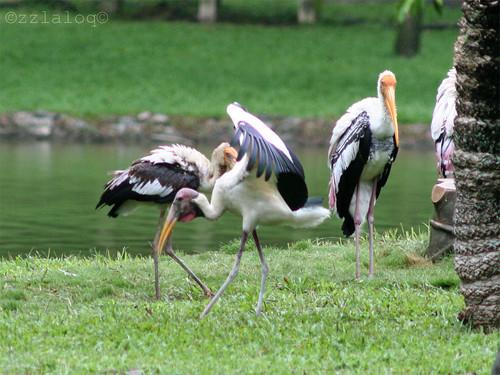 Stork Family