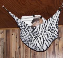 Posing pretty in her hammock