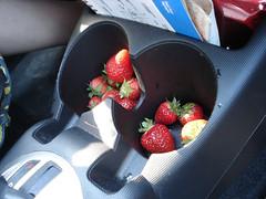 cup holder strawberries (Jannygirl) Tags: jessica strawberries cupholders hondafit