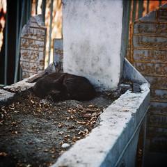 cat sleeping on an old grave (mert_yuksel) Tags: old macro grave cat gold zenit makro kedi helios eski mezar altın yazı türbe