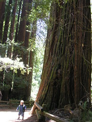 Muir Woods - Vito & the Giant Redwood