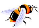 bee (3doel82) Tags: fish bird animals insect gambar koleksi ikan belajar burung binatang carnivora serangga mamalia amphibi