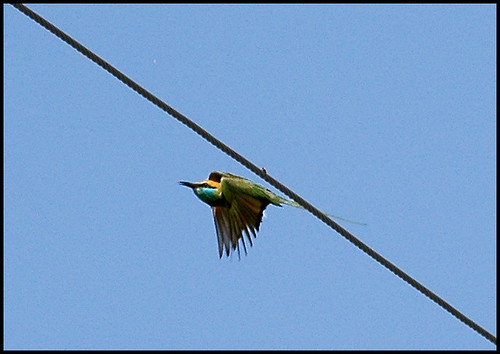 india bird birds asia birding karnataka birdphotography manchanabele saarc bengalooru