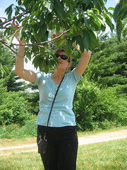 Michelle picking cherries