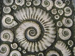 More Ammonites (Katie-Rose) Tags: uk pavement patterns dorset ammonite lymeregis artcafe katierose supershot explored seeninexplore theunforgettablepictures konicaminoltadimagex20 worldglobalaward globalworldawards
