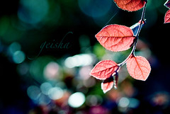 i look....& my heart does that thing... (~ geisha ~) Tags: red leaves bokeh flickrmeet royalbotanicgardens hbw notsquarelol spotmeteredwoohoo
