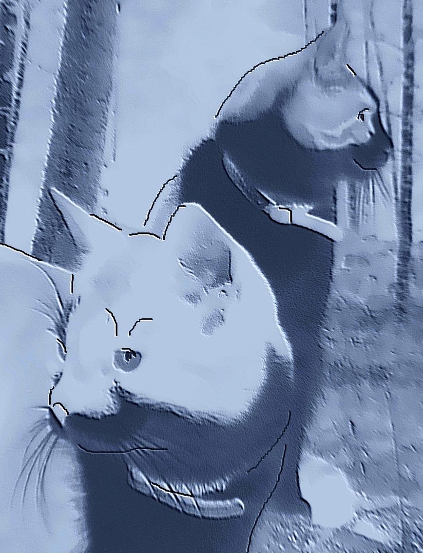 djurvänner, extrovert, introvert, katter, katthus, nitiskhet