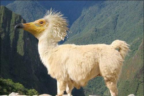 حيوانات وطيور لم تشاهدها من قبل  ( فوتوشوب ) 2822612325_181357bee5.jpg?v=0