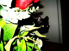 flowers 038 (Rosie Rose Rose) Tags: roses evil jinx