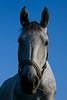 Horse named Bistra