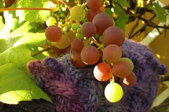 Grape harvest mittens