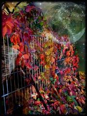 the healer (Eddi van W.) Tags: light love creativity energy handmade digitalart gimp creativecommons ritual meditation spirituality spiritual healing deepness kreativität spiritualität eddi07