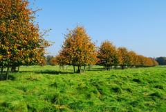Autumn Morning (jactoll) Tags: nikon picturesque d60 coughtoncourt alcester 5photosaday aplusphoto autumn2008images