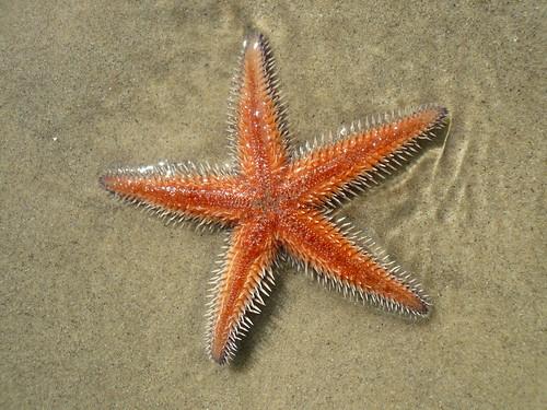 blog voyage australie sydney whv backpacker travel rose bay eoile mer orange