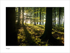 The source of life (Regenlicht) Tags: searchthebest kreidefelsen mywinners