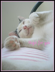 Happiness (sevgi_durmaz) Tags: animals cat happiness belly hugs lovely cuteness relaxed kissable happycat catpaws funnycats pamuk beautifulcats kissablekat