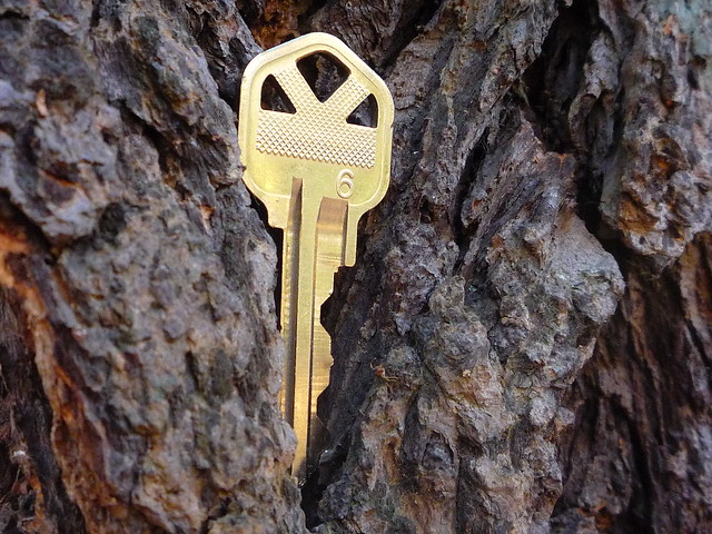 key in the tree