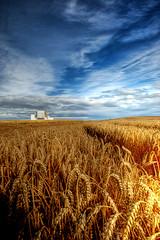 Golden Hour (Esther Seijmonsbergen) Tags: uk field station clouds landscape scotland energy europe power wheat dunbar powerstation hdr goldenhour schotland 3xp britishenergy foregroundinterest estherseijmonsbergen