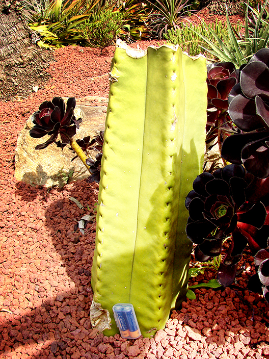 Royal Botanic Gardens Sydney - Succulent Garden (Image Heavy) 3009419349_82de079b68_o