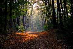 go through! (kubse) Tags: wood autumn light nature inspire blueribbonwinner top20autumn wienerhütte