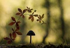 autumn (Geir Drabls) Tags: autumn nature bec mb thebest adobebridge naturesfinest blueribbonwinner athousandwords carbonfootprint imagepoetry bej passionphotography fineartphotos grouplife abigfave xploremypix anawesomeshot ultimateshot visiongroup infinestyle ithinkthisisart amazingamateur theunforgettablepictures ultimategold theunforgettablepicture platinumheartaward elitephotography betterthangood goldstaraward photoexplore yourpreferredpicture  mymegashot spiritofphotography multimegashot bestcasescenery macrosdenaturaleza thegoldsealofquality alemdagqualityonlyclub damniwishidtakenthat alemdaggoldenaward 100arzorlessthan500 magicdonkeysbest monkeyawards kornrawieegallery inspireinviteonly theshowofthemacro ~soulexpression~ ~newenvyofflickr~ dragonflyawardsgroup specialspictures inspiredbyyourbeauty thedantecircle theuleftmeinawe thebokehholicsanonymous thetheworldsbestnaturewildlifeandmacrophotography worldclassnaturephoto thenewselectbest flickrenvythebesttm