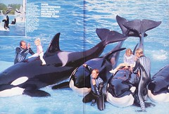 New Look n66 1989 6 (valentin666) Tags: killer scanned whale orca orque