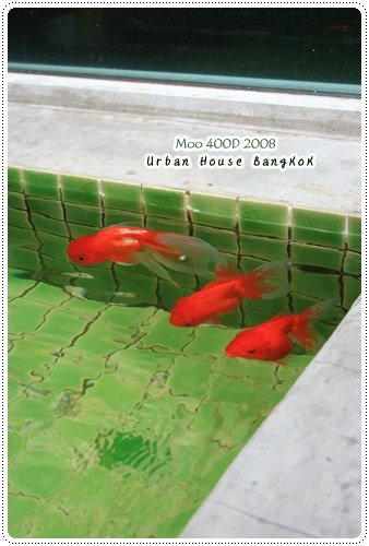 Urban House 魚-2
