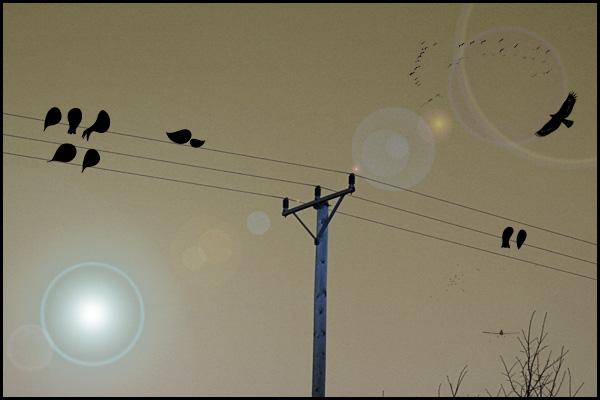 Fåglarpå-tråd