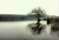 Nature's still.......... (Nicolas Valentin) Tags: tree nature scotland still scenery oneofakind dreamy loch soe beautifull abigfave damniwishidtakenthat storybookwinner