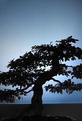 Bonsai... (Explore.Appreciate.Love.Inspire) Tags: travel trees sky mist lake snow tree fall nature water leaves leaf pond branch natural bonsai colorphotoaward