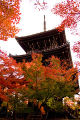 (yocca) Tags: autumn wow temple kyoto momiji  2008 shinnyodo autumntints  nov2008