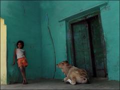 Youngs (Christian Lagat) Tags: door india green girl smile cow women vert porte grdigital fille sourire vache inde madhyapradesh devanagari भारत maheshwar ricohgrd 50millionmissing
